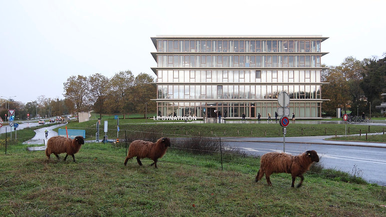 another : international sports sciences institute - university of lausanne