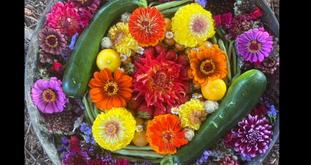 Bohemian Flowers Farmstand: A Short Film (Full)