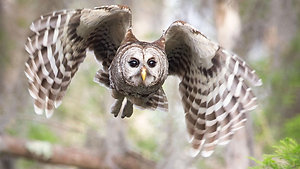 Owl - Animal Insights