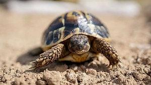 Turtle - Animal Insights