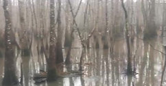 The cypress swamps surrounding Gryphon's Nest