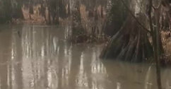 Rainfall in the swamps