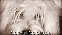 Cottontailcotons.ca