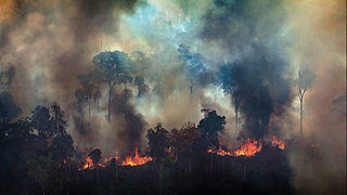 NEXT UP - A FILM ABOUT THE AMAZON RAINFOREST