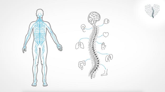 Was ist Chiropraktik?