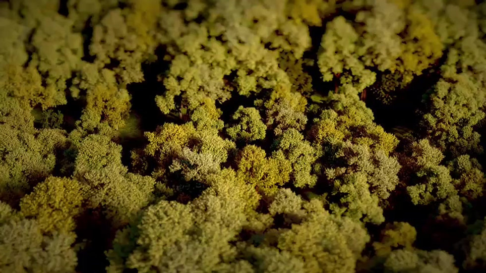 Promo Curative Cannabis