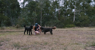 Melbourne Dog Company