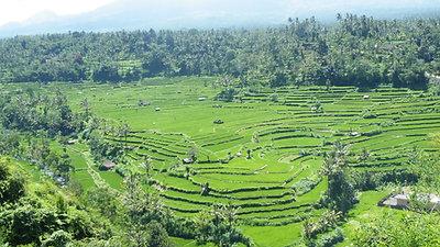 film Bali