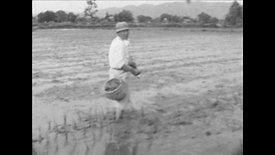 田植え|Rice planting