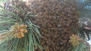 Beelieve In Nature