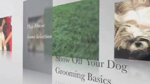 Show Off Your Dog GROOMING BASICS