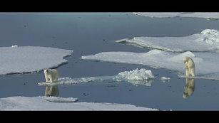 Ours blanc dans la mer de Beaufort