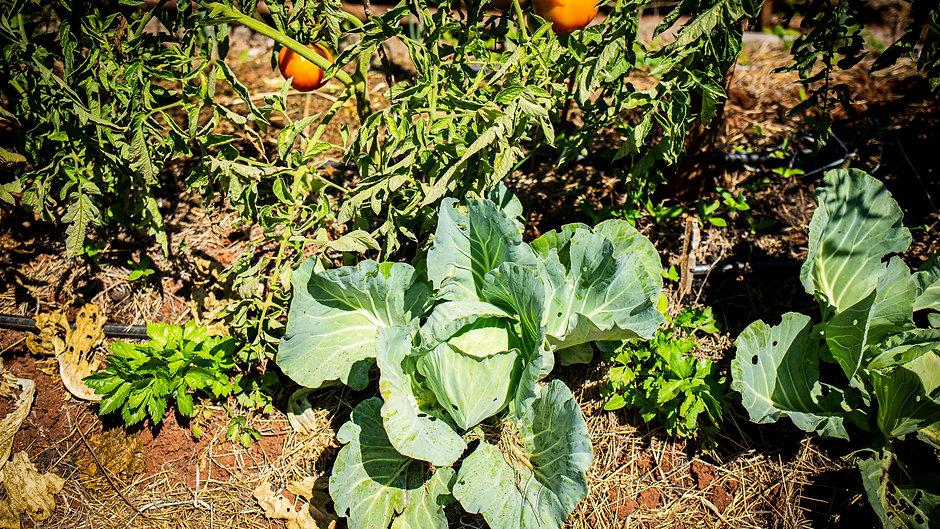 Tutoriales de Agricultura Regenerativa