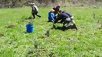 Spring Planting part 1