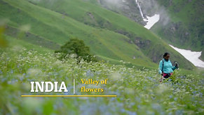 INDIA: Valley of flowers