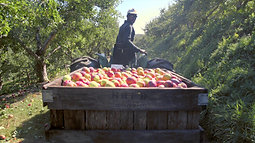 Hudson River Fruit Distributors