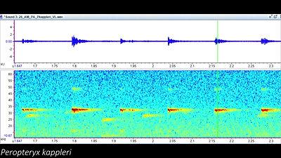 Exemplos de sons da Amazônia