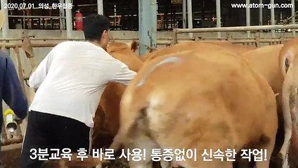 2020年7月1日韩国牛肉接种义城