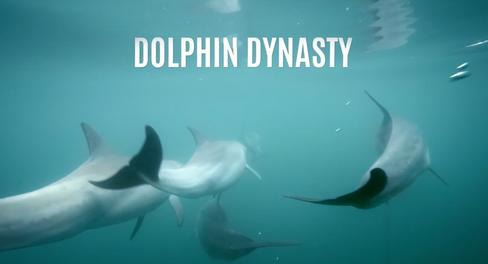 Dolphin Dynasty - Nat Geo