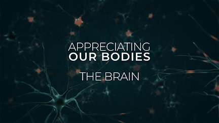 Appreciating our bodies - The Brain