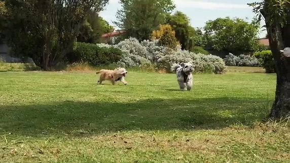 Walking pals
