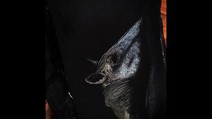 Cheval dans son ombre