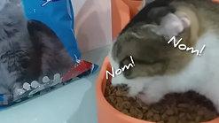 Profelin Dry Cat Food Tuna 20kg