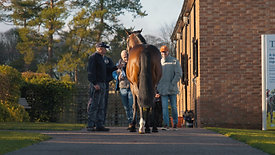 Shadwell Stud - Beech House Stallion Parade