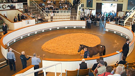 Shadwell Stud - Tattersalls Yearling Sales 2018