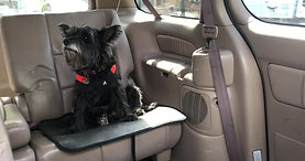Buster in the Car on a Bucket Seat Mat