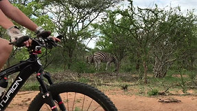 MTB Wildlife clip 1