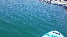 paddle boarding Hvar