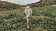 The Pale Stallion