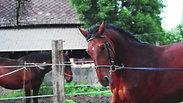 The Scarlet Stallion