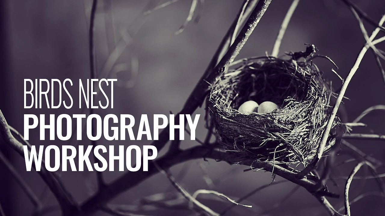 BIRDS NEST PHOTOGRAPHY WORKSHOP