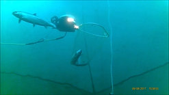 Mortality Extraction with ROV