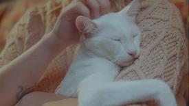 Drogavet - O pior gato do mundo