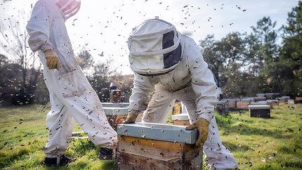"""Documentaire """"l'apicultrice des roches rouges"""" - Extrait sur la fabrication du pollen"""