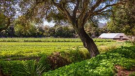 H&S Ranch - 4120 Foothill Road, Carpinteria