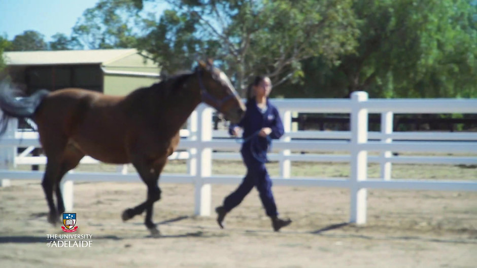 Life as a Veterinary Student - University of Adelaide