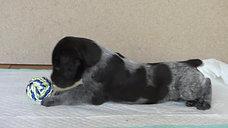 Askia 4 Wochen alt