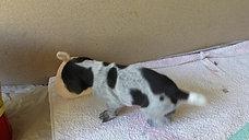 Arjan 4 Wochen alt
