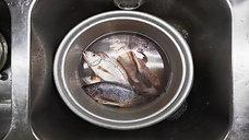 Fisch 5S