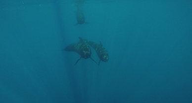 GOPR0956 Pilot Whales