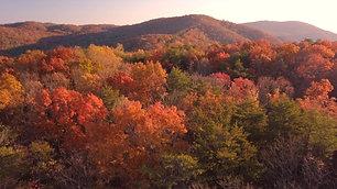Drone Autumn High Level