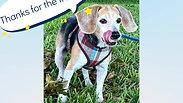 AMI Pup Rescue Reba