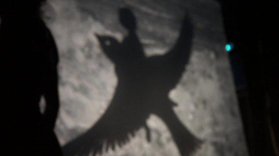 Z'oiseaux - Teaser
