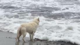Surfen op de golven