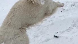 In de sneeuw spelen