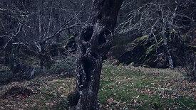 """TRINTA LUMES"" - Trailer"